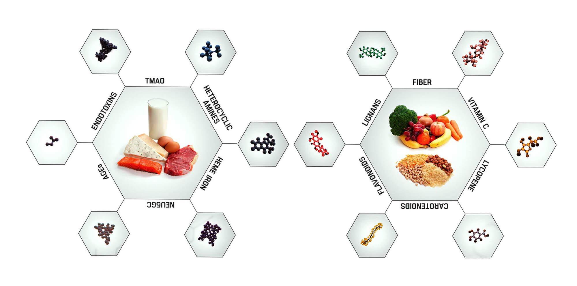 Plant Based Nutrition Core Principles